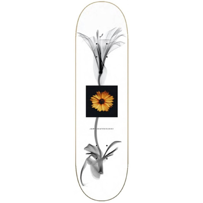 """JART X RAY 8.25""""X31.85"""" LC DECK ASSORTED 8.25"""""""